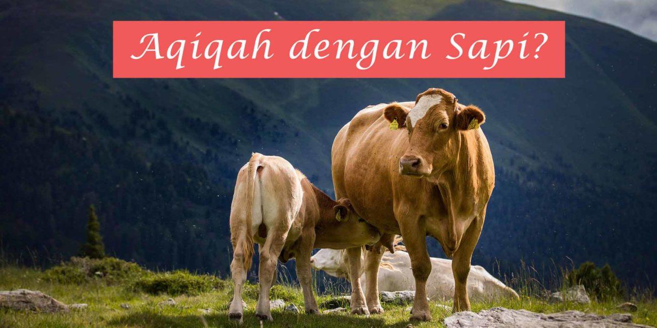 aqiqah dengan sapi